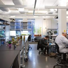 SVA Nature & Technology Lab