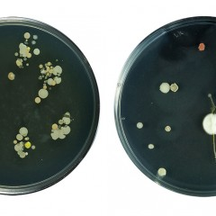 Other finger prints (the artist's microbiome)