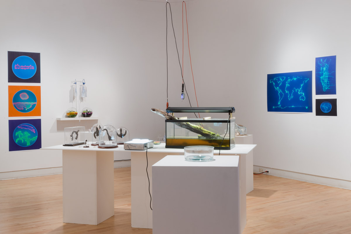 Where is the Art in Bio Art? Installation view