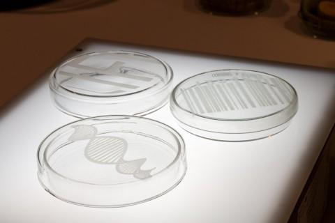 Lichtenberger DNA, 2014