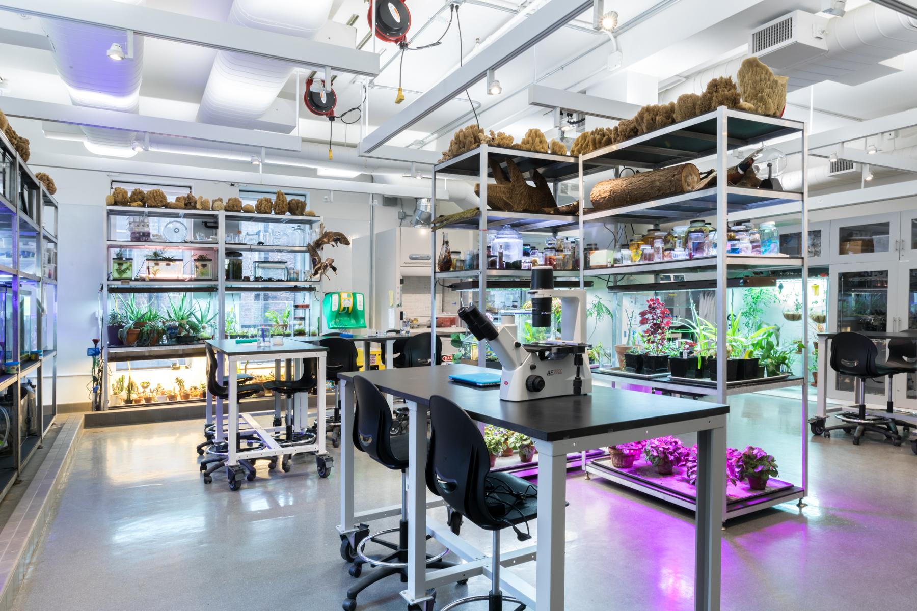 SVA Bio Art Lab
